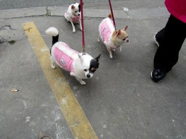Random picture of doggie cuteness!!