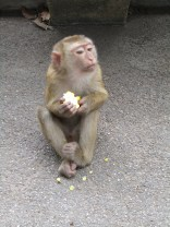The little monkey who, after this piece of corn....