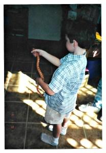 young boy carefully holding a corn snake