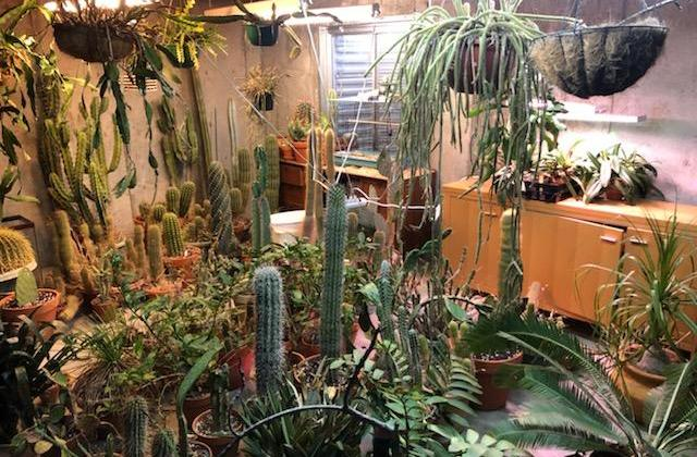 cactus stored in basement during cold weather
