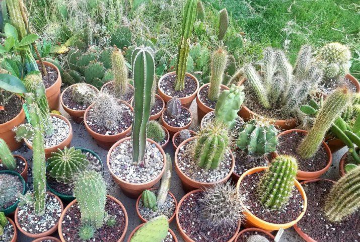 cactus outside