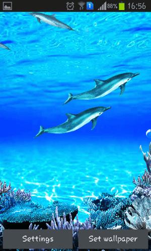 Dolphin Sound Live Wallpaper