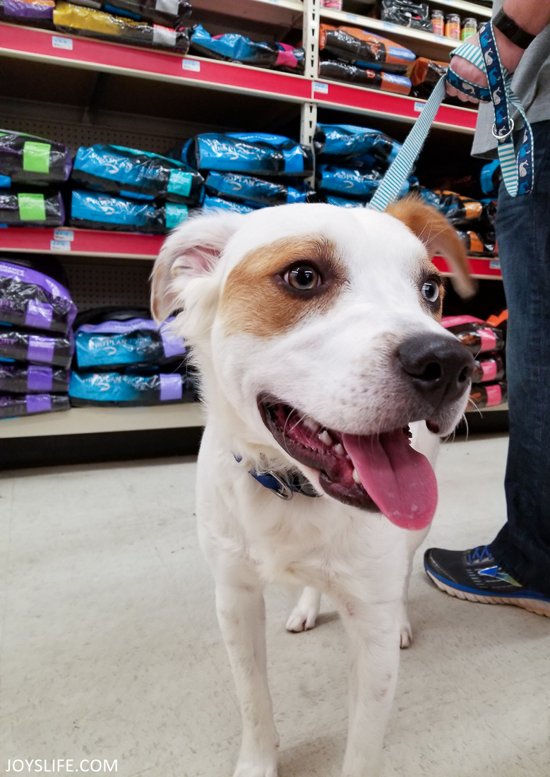 puppy tongue Purina aisle at Tractor Supply Co