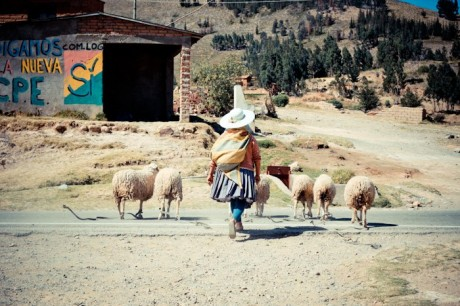 Bolivian woman herding her sheep.