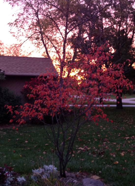 Elli's tree at sunrise