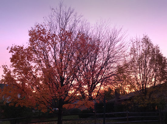 dawn behind the maple tree