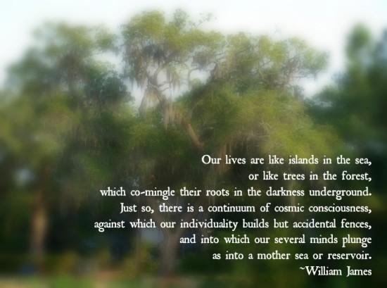 Quotation of William James