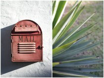 Red mail post box and aloe leaves