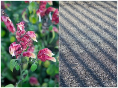 Pink flowers and line shadows