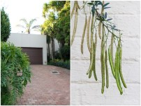 House and Green Pods