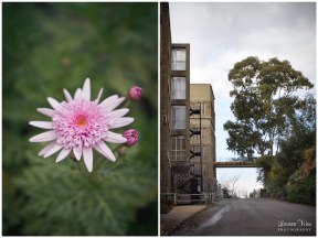 Pink Flower and Old flat in Killarney
