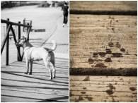 Dog on wooden bridge wet footprints