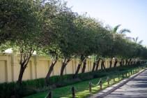 Tree Lined street in Lonehill