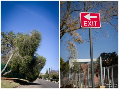 Tree hanging over road and exit sign