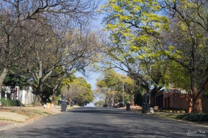 Tree Lined streets in linden