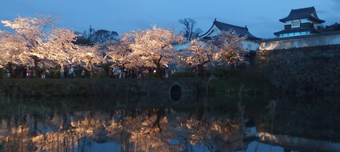 Where to visit for the Cherry Blossoms in Fukuoka City? Sakura in 2016