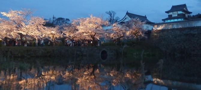 Where to visit for the Cherry Blossoms in Fukuoka City? Sakura in 2016
