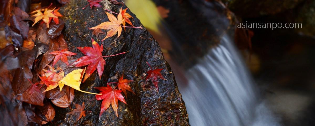 京都 下鴨神社 紅葉