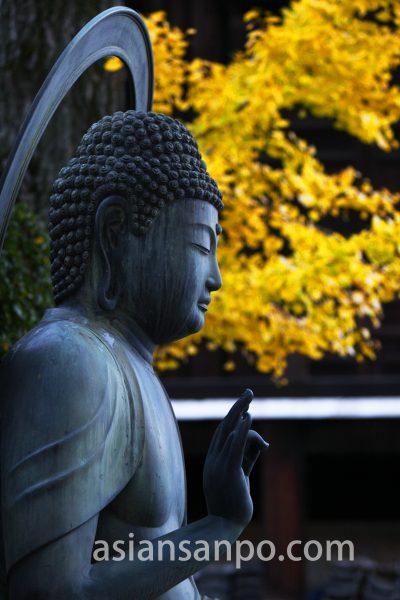 京都 栄摂院 紅葉