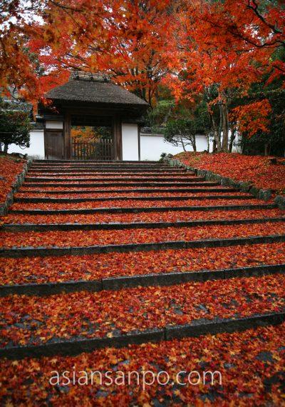 京都 安楽寺 紅葉