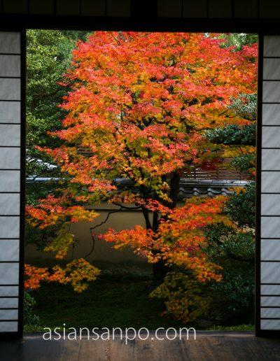 京都 雲龍院 紅葉