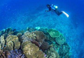 サンゴ礁1 L