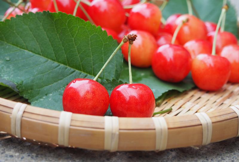 フルーツ狩り7月編 東京から近い旬な果物狩りおすすめスポット ...