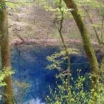 【青森県深浦町】青池は日本が世界に誇る青い秘境!青池観光の魅力や楽しみ方を解説!