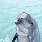 【青森県青森市】浅虫水族館の海底トンネルで青森の海を体感しよう!イルカの歌も聴ける地元民おすすめのスポット