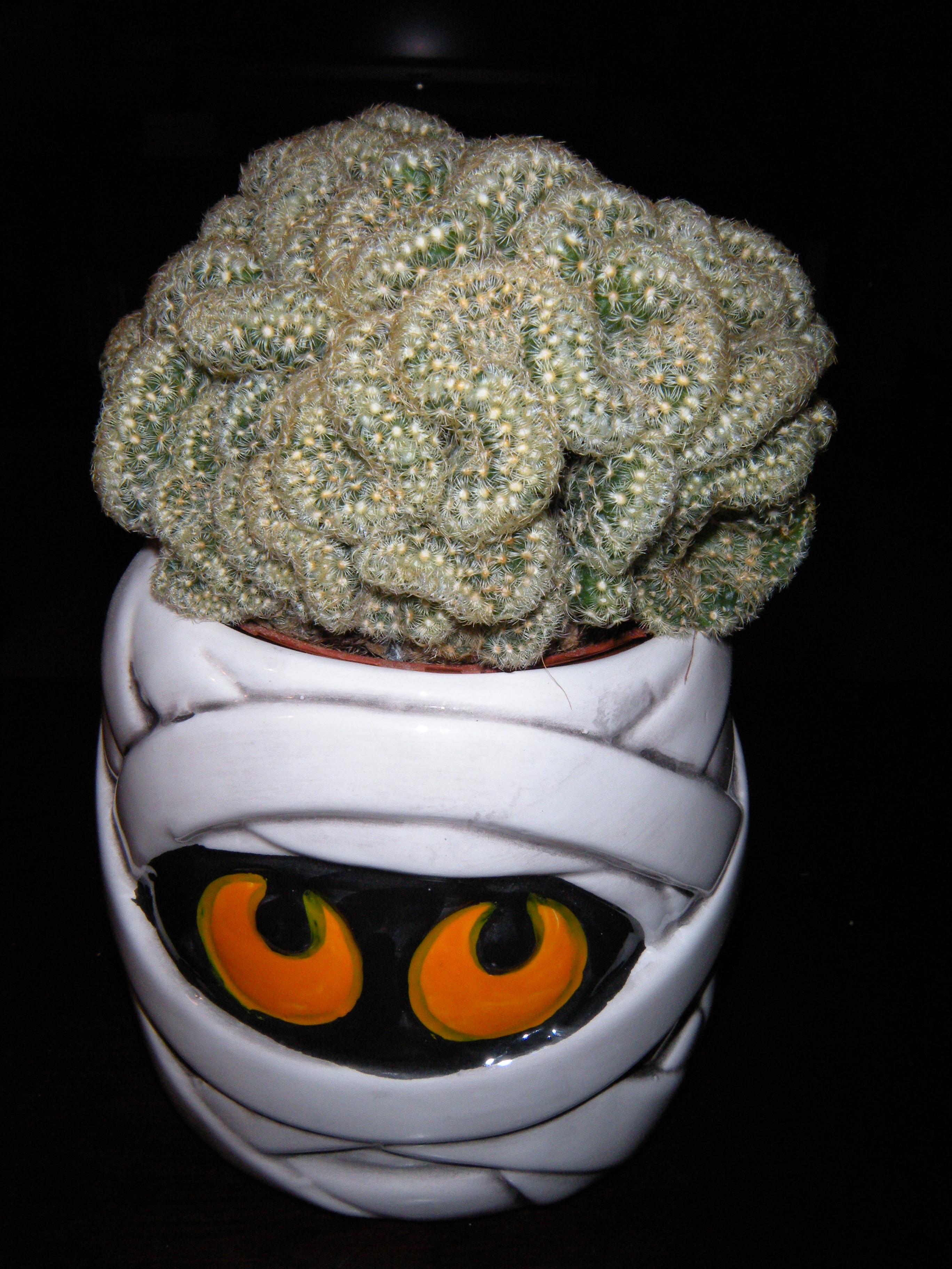 Halloween Brain Cactus photo JParadisi