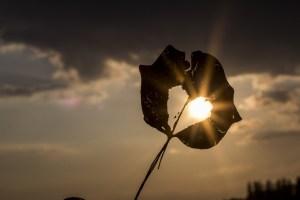 sun-622740_1280