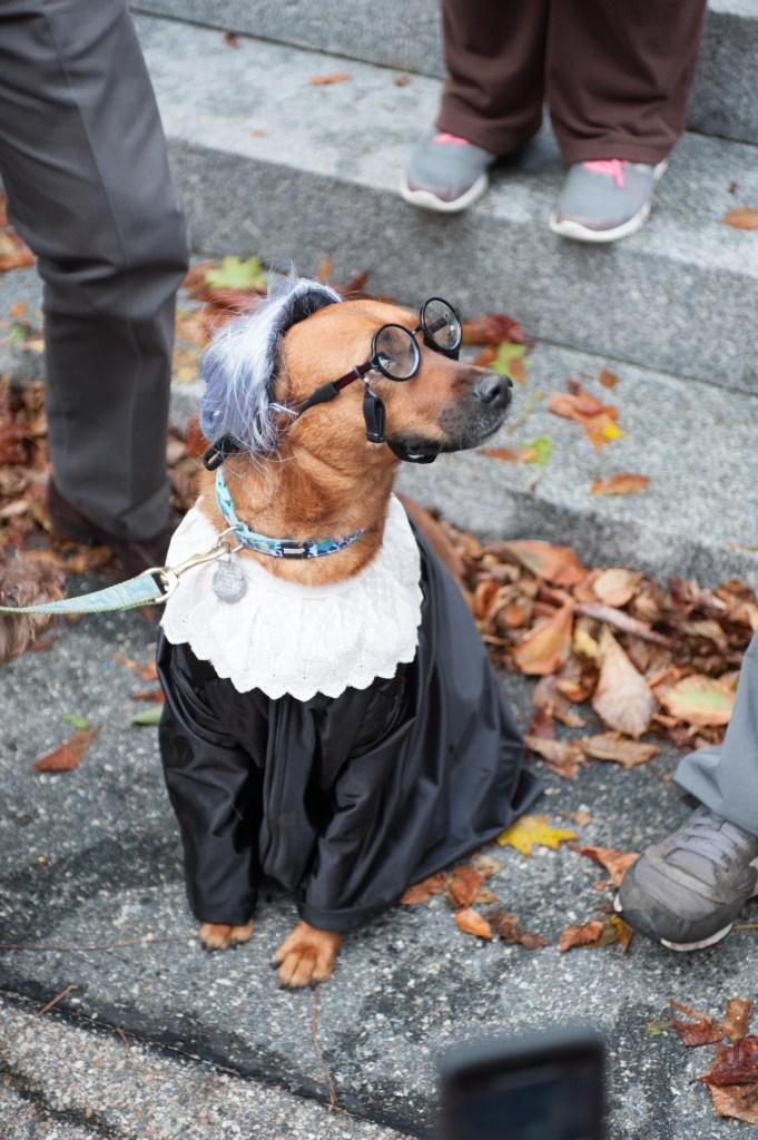 Dog Parade Winner