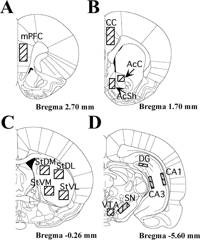 Induction Patterns Of Transcription Factors Of The Nur