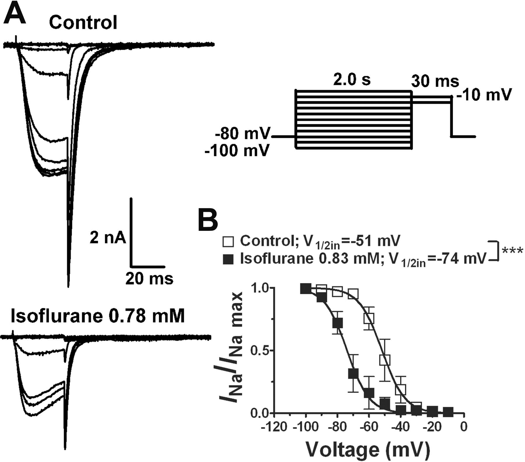 Isoflurane Inhibits Nachbac A Prokaryotic Voltage Gated Sodium Channel
