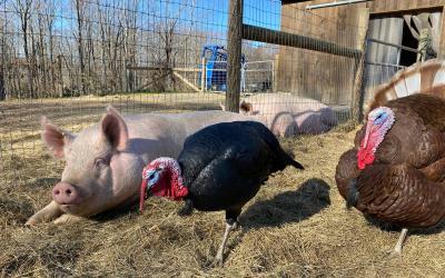Turkey talk with … Ronald and Bernard