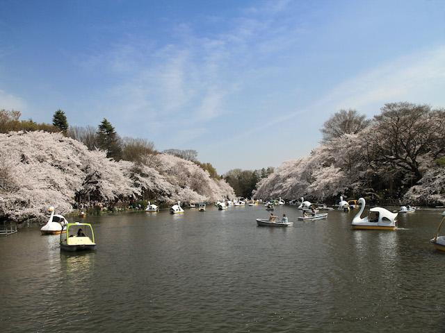 이노카시라공원
