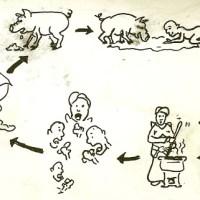 Feeding+Feces+Cycle