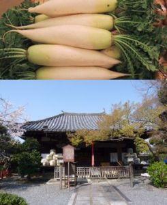 daikon&shakadou