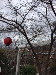 千本ゑんま堂 桜.JPG