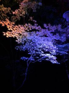 下鴨神社ライトアップ3.JPG