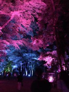 下鴨神社ライトアップ2.JPG