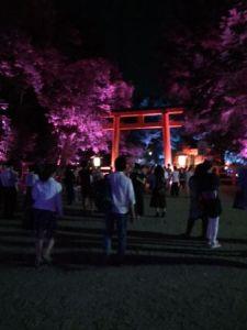 下鴨神社ライトアップ 鳥居 桃.JPG