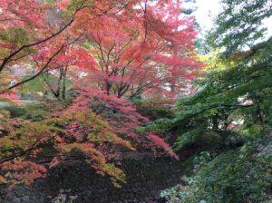 京都 紅葉 しょうざん