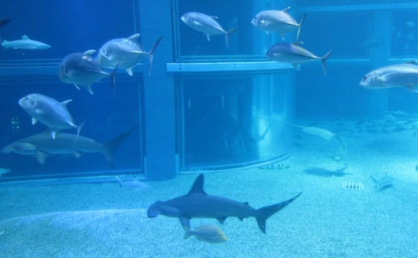 Trip to Osaka Kaiyukan Aquarium by Osaka Kaiyu Ticket