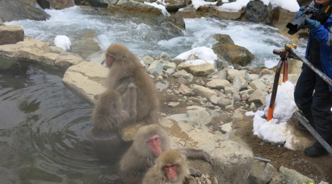 Trip to Tohoku, Chubu and Chugoku in 2016 winter – Part 9, Visit Snow Monkey Park in Nagano