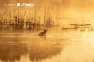 Misty Sunrise Over The East Lagoon At Staveley