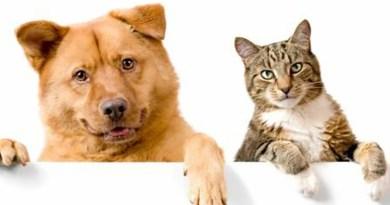 Várzea inicia agendamento para vacinação de cães e gatos