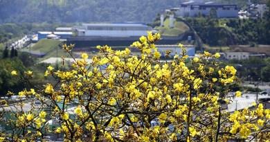 Primavera começa nesta terça-feira