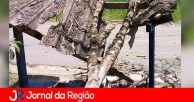 Árvore derruba abrigo em ponto de ônibus