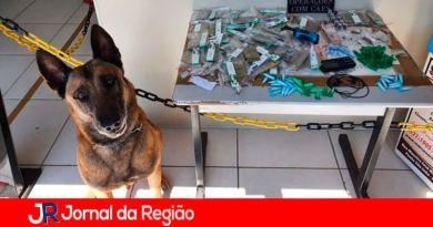 Canil da GMJ. (Foto: Divulgação)
